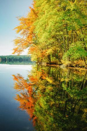 Fall Color Reflections ay Holderness New Hampshire, New England by Vincent James