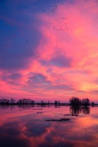 Fiery Marsh Sunset and Reflection, Merced Wildlife Refuge, California by Vincent James