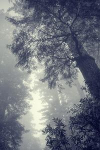 Fog and Forest Portrait by Vincent James