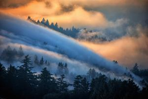 Fog and Sun Mix, Marin, Northern Califiornia by Vincent James