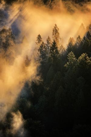 Fog & Light Mix Abstract Mount Hood Wilderness Sandy Oregon Pacific Northwest by Vincent James