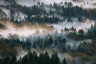 Fog & Light Rays Beams Abstract Mount Hood Wilderness Sandy Oregon Pacific Northwest by Vincent James