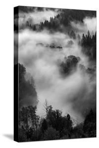 Fog Mist and Trees at Sandy River Black White Landscape Oregon by Vincent James