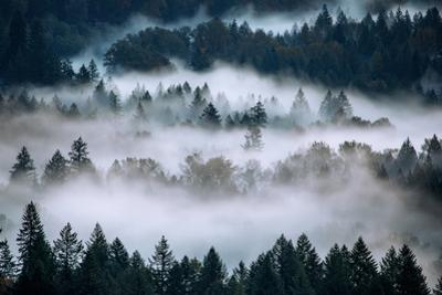 Fog & Tree Abstract Mount Hood Wilderness Sandy Oregon Pacific Northwest by Vincent James