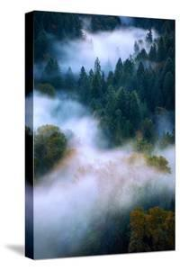 Fog Trees & Autumn Abstract Mount Hood Wilderness Sandy Oregon Pacific Northwest by Vincent James
