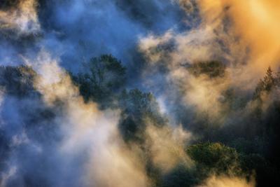 Fog Wonderland Abstract Mount Hood Wilderness Sandy Oregon Pacific Northwest by Vincent James