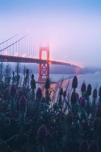 Foggy Golden Gate Bridge and Wildflowers, San Francisco by Vincent James
