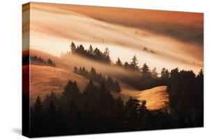 Gold Rush Fog Sweeping Hills of Mou7nt Tamalpais, Tam Marin by Vincent James