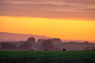 Golden Hour, Petaluma Hills, Farm Scene, Sonoma County by Vincent James