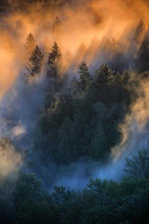Golden Light Beams & Fog Abstract Mount Hood Wilderness Sandy Oregon Pacific Northwest by Vincent James
