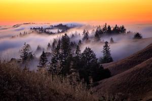 Golden Sunset and Fog Flow Marin Mount Tamalpais San Francisco by Vincent James