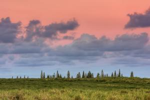 Hana Landscape, Maui by Vincent James