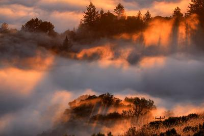 Heavenly Fog Trees & Golden Light Abstract Russian Ridge Silicon Valley California by Vincent James