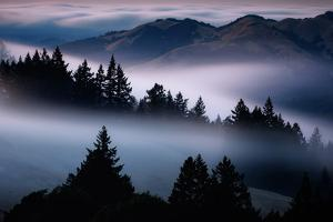 Heavenly Summer Fog Flowing Through The Hills And Trees, Mount Tamalpais by Vincent James