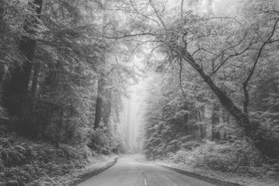 Hidden Coastal Highway, Redwood Coast California by Vincent James