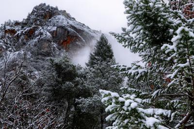 Hillside Scene Snow Trees Winter in Yosemite National Park by Vincent James