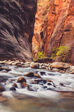 In The Narrows Autumn Southern Utah Ziona National Park by Vincent James