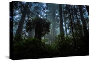 Into The Woods, California Redwoods Humboldt by Vincent James