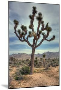 Joshua Tree Scene by Vincent James