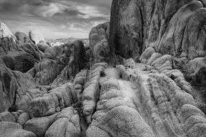 Landscape at White Tank, Joshua Tree by Vincent James