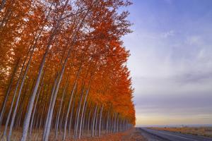 Leaning Towards Autumn, Boardman, Oregon by Vincent James