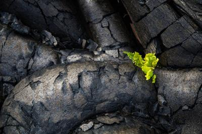 Life Among Ashes Lava Hawaii Volcano National Park Big Island by Vincent James