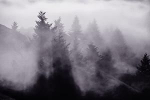 Light and Fog Play in Black and White, Nature Abstract by Vincent James