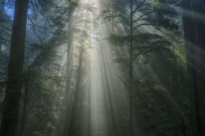 Light and The Dark Redwood Forest, California Coast by Vincent James