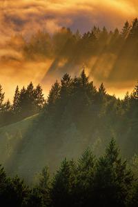 Light Fog and Tree Design, Mount Tamalpais, San Francisco, Callifornia by Vincent James