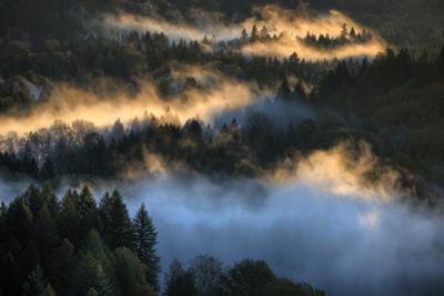 Light & Fog Wonderland Abstract Mount Hood Wilderness Sandy Oregon Pacific Northwest by Vincent James