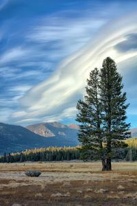 Lone Tree and Cloudscape, Alpine County, Sierra Nevada, California by Vincent James
