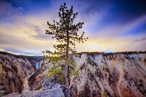 Lone Tree at Grand Canyon of the Yellowstone, Yellowstone National Park, Wyoming by Vincent James