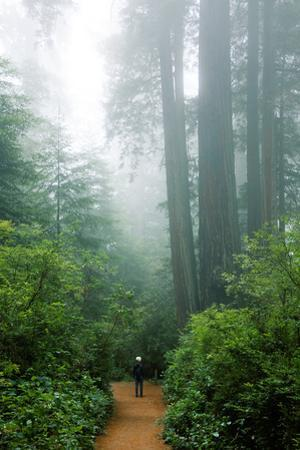 Lost in the Trees, Redwood National Park, California Coast by Vincent James