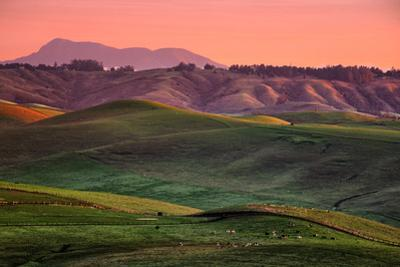 Lovely California Hills in Morning Light, Marin County, Bay Area by Vincent James