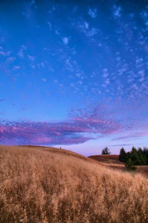 Magic Hillside at Mount Tamalpais San Francisco Bay Area by Vincent James
