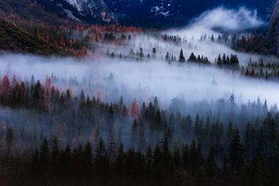 Magical Flow Mesmer Fog & Light Trees Sark Yosemite Winter Storm Valley by Vincent James
