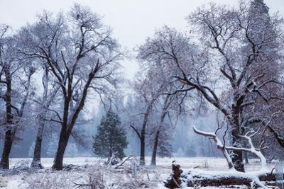 Magical Snow in the Valley El Capitan Meadow Trees & Mist Yosemite Valley by Vincent James