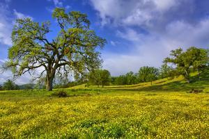 Magical Spring Afternoon at Shell Creek Road, Atascadero California by Vincent James