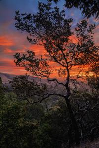 Manzanita Sunrise Design, Epic Sunrise Color Over Mount Diablo, Oakland, Bay Area by Vincent James