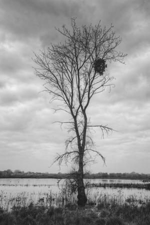 Marsh Tree, Central Valley California by Vincent James