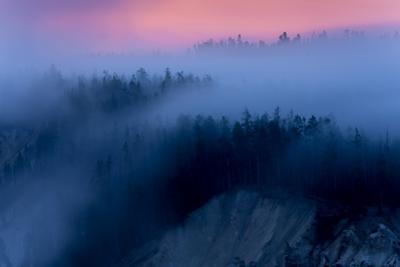Meditative Fog Flow & Sunrise Glow Trees Canyon Yellowstone Wyoming by Vincent James