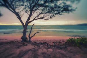 Memory Beach, Kauai by Vincent James