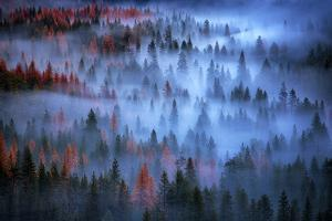 Mesmer - Moody Fog and Trees, Yosemite Valley, National Parks by Vincent James