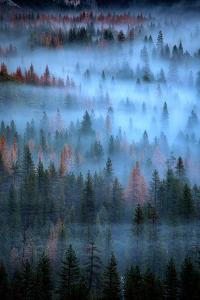Mesmerizing Fog and Trees, Yosemite Valley, National Parks, California by Vincent James