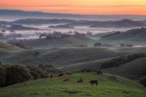 Misty and Foggy Hills Just Before Sunrise, Petaluma, California by Vincent James