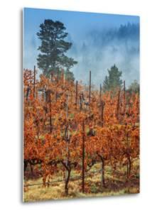 Misty Autumn Vineyard, Calistoga Napa Valley by Vincent James