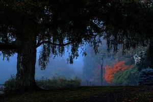 Misty Morning Path, Portland, Oregon by Vincent James