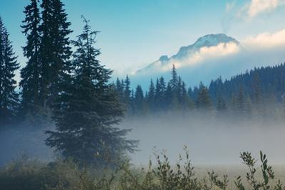 Misty Mount Hood Meadow in Spring, Oregon Wilderness by Vincent James
