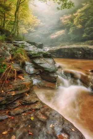 Misty Mountain Creekside, Catskills by Vincent James