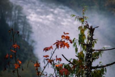 Misty River & Northern Flicker Autumn Sandy Oregon Pacfic Northwest by Vincent James